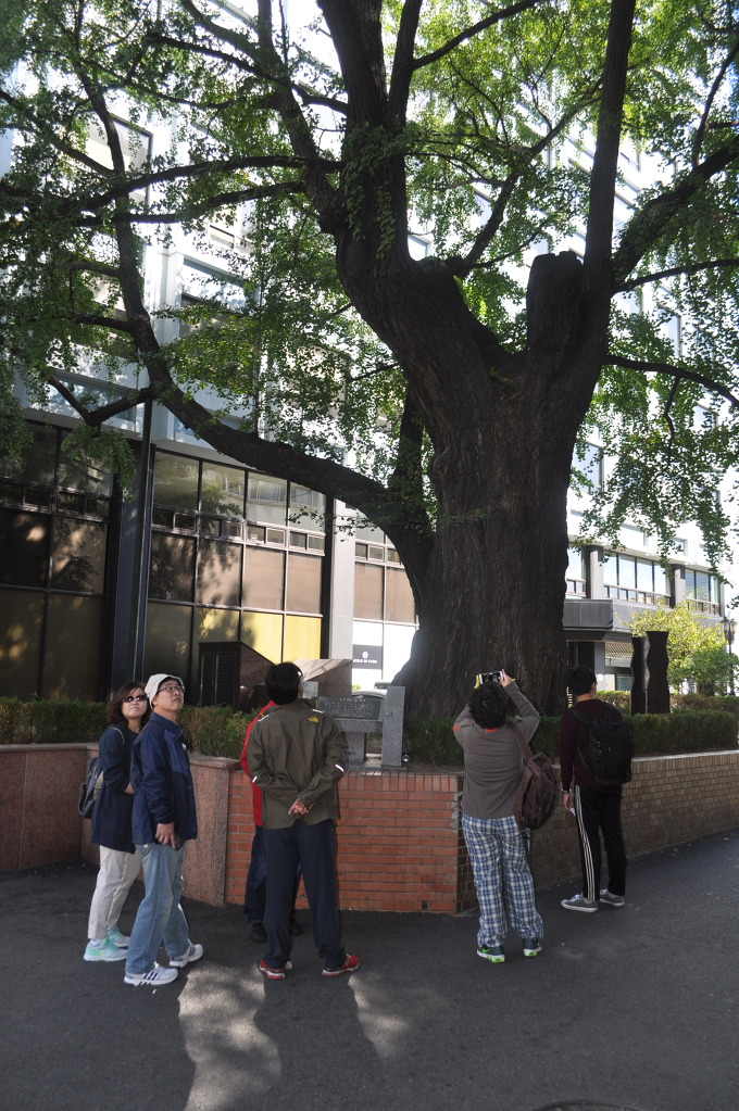 이현궁터_앞_은행나무